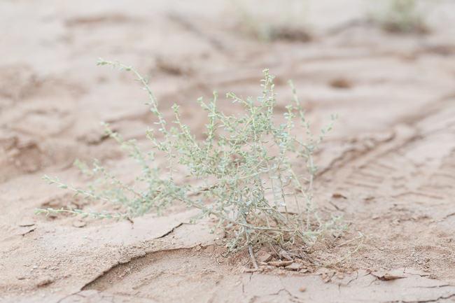 Whimsical Arizona Desert Engagement Shoot