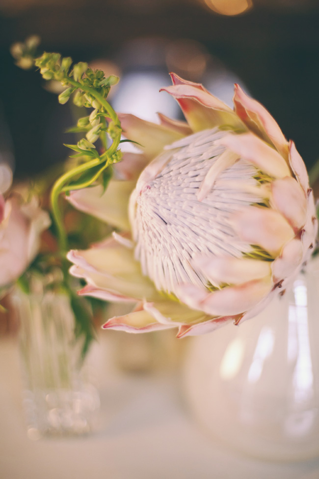 Protea Filled Wedding at Langkloof Roses {Tertius Gous Photography}