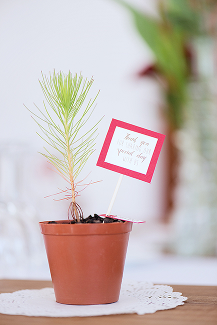 Eco Friendly Wedding Favors - Tree Saplings (1)
