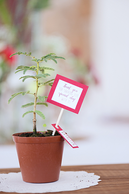 Eco Friendly Wedding Favors - Tree Saplings (2)