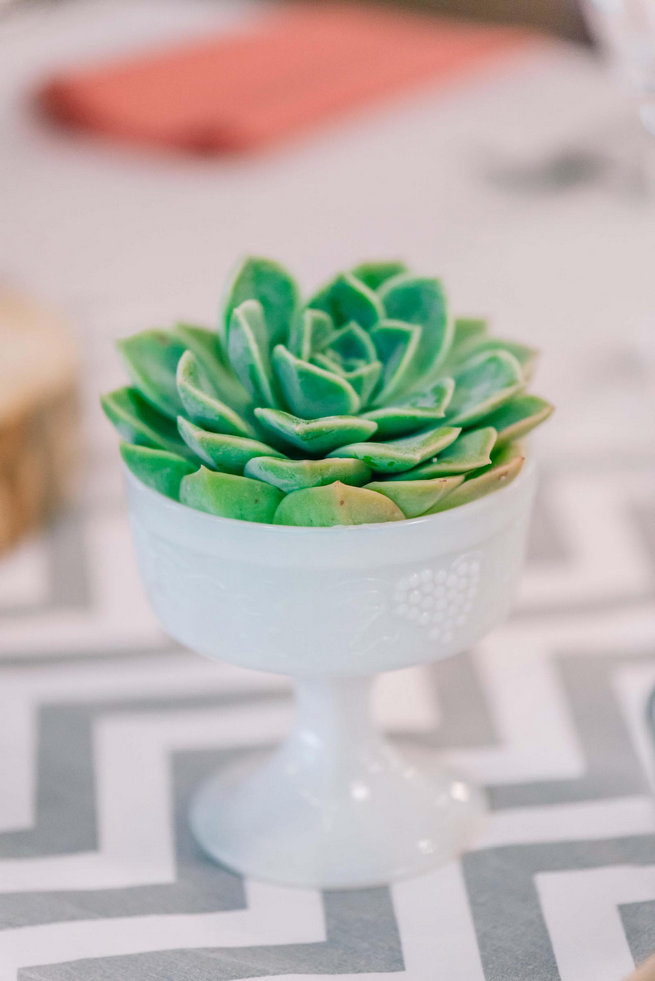 Echeveria succulent // Langkloof Roses Wedding, Cape Town - Claire Thomson Photography