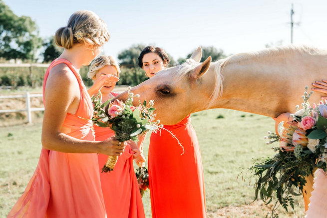 Horse eating bouquets! / Langkloof Roses Wedding, Cape Town - Claire Thomson Photography