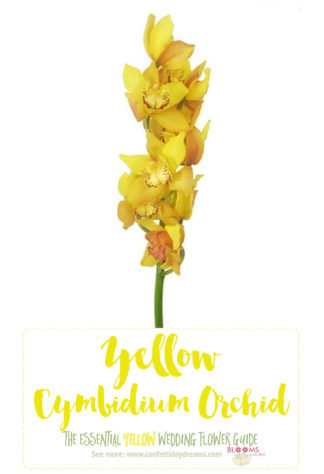 Light Yellow Flowers - Yellow Cymbidium Orchid