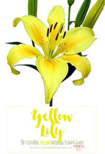 Light Yellow Flowers - Yellow Lily