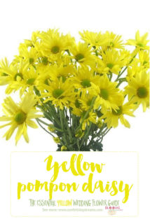 Light Yellow Flowers - Yellow Pompon Daisy