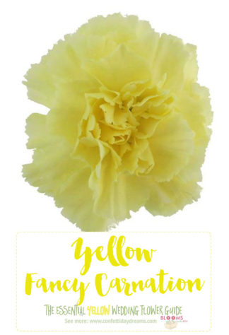 Types of Yellow Flowers - Yellow Carnation