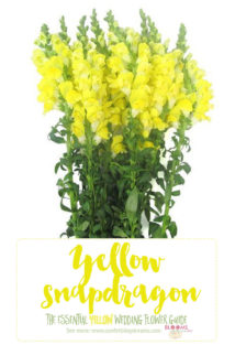 Yellow Wedding Flowers - Yellow Snapdragon
