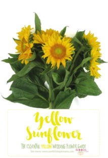 Yellow Wedding Flowers - Yellow Sunflower