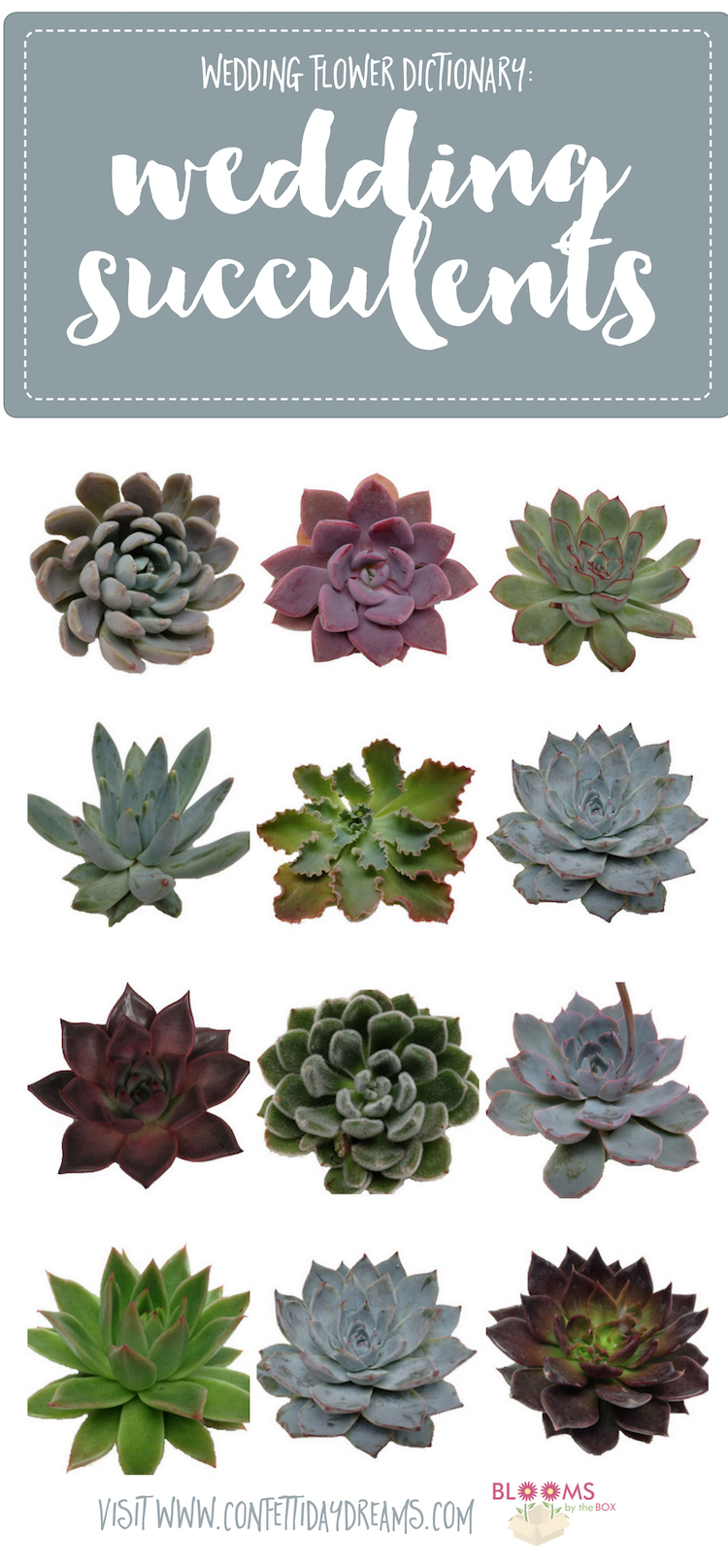 These Long Lasting Love Giving Little Plants Come In A Wide Range Of Shapes Sizes And Colors So It Can Be Difficult To Settle On Just One