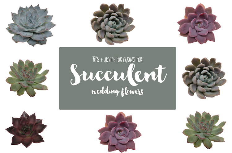 Wedding Succulents: Care and tips