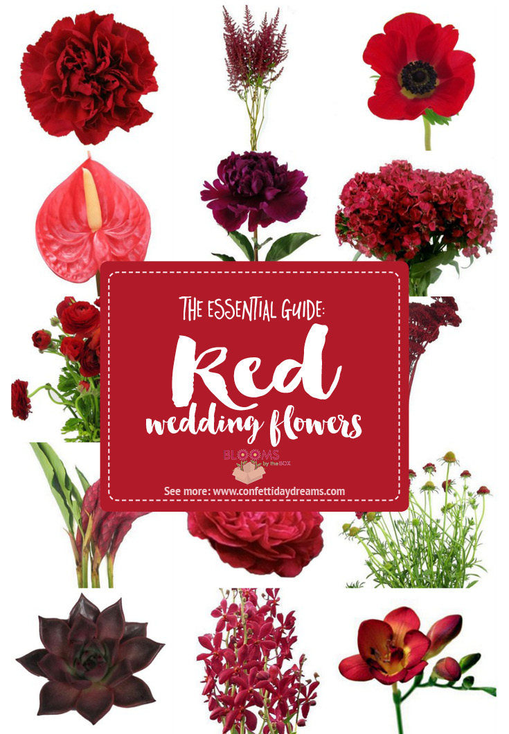 Complete guide to red wedding flower names and types