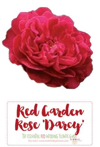 Burgundy roses Red wedding flowers